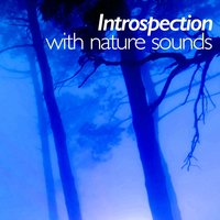 Introspection with Nature Sounds — Sleep Sounds Of Nature