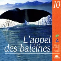 The Call Of The Whales (L'Appel Des Baleines) — Relaxation - Ambient