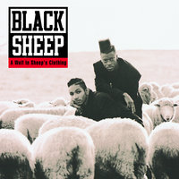 A Wolf In Sheep's Clothing — Black Sheep