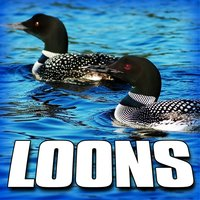 Loons (Nature Sound) — Sounds Of The Earth