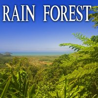 Rain Forest — Nature Soundscape