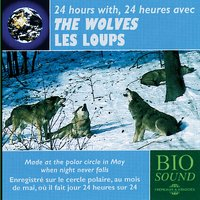 24 Hours with the Wolves - Avec les loups — BioSound