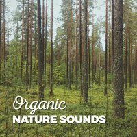 Organic Nature Sounds — Звуки природы