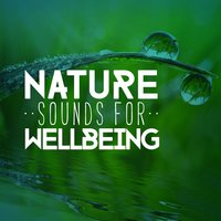 Nature Sounds for Wellbeing — Healing Sounds for Deep Sleep and Relaxation, Nature Sounds Therapy, Mediation Sounds of Nature, Nature Sounds Therapy|Healing Sounds for Deep Sleep and Relaxation|Mediation Sounds of Nature