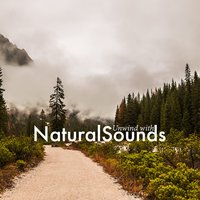 Unwind with Natural Sounds — Sleep Songs with Nature Sounds