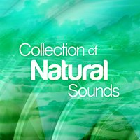 Collection of Natural Sounds — Natural Sounds, Rain Sounds, Nature Sound Collection