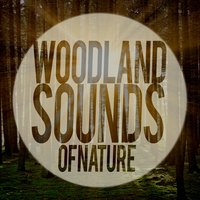 Woodland Sounds of Nature — Sounds of Nature!