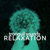 Tranquil Sounds Relaxation — Sounds of Nature for Deep Sleep and Relaxation, Sondios de la Naturaleza Relax, Tranquil Music Sounds of Nature, Tranquil Music Sounds of Nature|Sondios de la Naturaleza Relax|Sounds of Nature for Deep Sleep and Relaxation