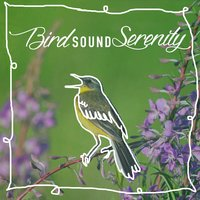 Bird Sound Serenity — Calm Bird Sounds