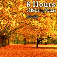 8 Hours of Relaxing Nature Sounds — Nature Soundscape