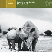 ANIMALS OF AFRICA Sounds of the Jungle, Plain & Bush — ANIMALS OF AFRICA Sounds of the Jungle, Plain & Bush