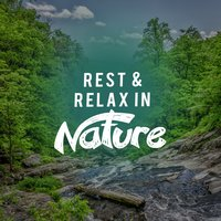 Rest & Relax in Nature — Rest & Relax Nature Sounds Artists