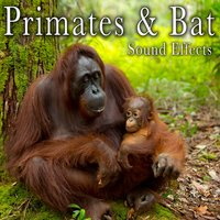 Primates & Bat Sound Effects — The Hollywood Edge Sound Effects Library