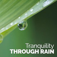 Tranquility Through Rain — Thunderstorms