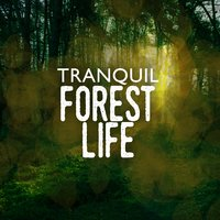 Tranquil Forest Life — Звуки природы