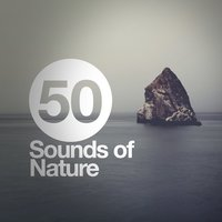 50 Sounds of Nature — Sounds of Nature Relaxation
