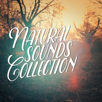 Natural Sounds Collection — Natural Sounds, Nature Sound Collection, Natural Sounds|Nature Sound Collection|Nature Sounds