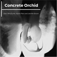 Concrete Orchid — Jennifer Brown, WhizDumb, Apollo Piero