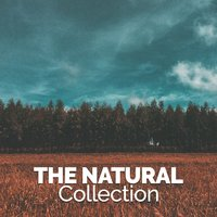 The Nature Collection — Healing Sounds for Deep Sleep and Relaxation