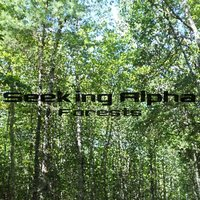Forests — Seeking Alpha