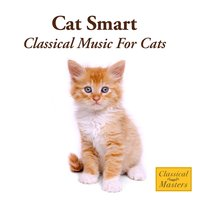 Cat Smart - Classical Music For Cats — St. Martin's Orchestra