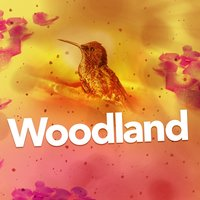 Woodland — Natural Forest Sounds