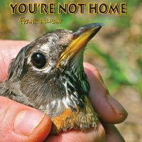 You're Not Home — Frank Allison