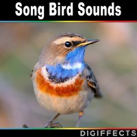 Song Bird Sounds — Digiffects Sound Effects Library
