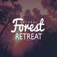 Natural Forest Retreat — Nature Retreat