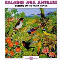 Balades aux Antilles - Birding in the West Indies — Frémeaux Nature