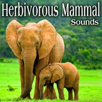 Herbivorous Mammal Sounds — The Hollywood Edge Sound Effects Library