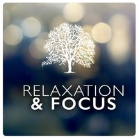 Relaxation & Focus — Relax & Focus