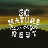50 Nature Sounds for Rest — Sounds Of Nature Relaxation