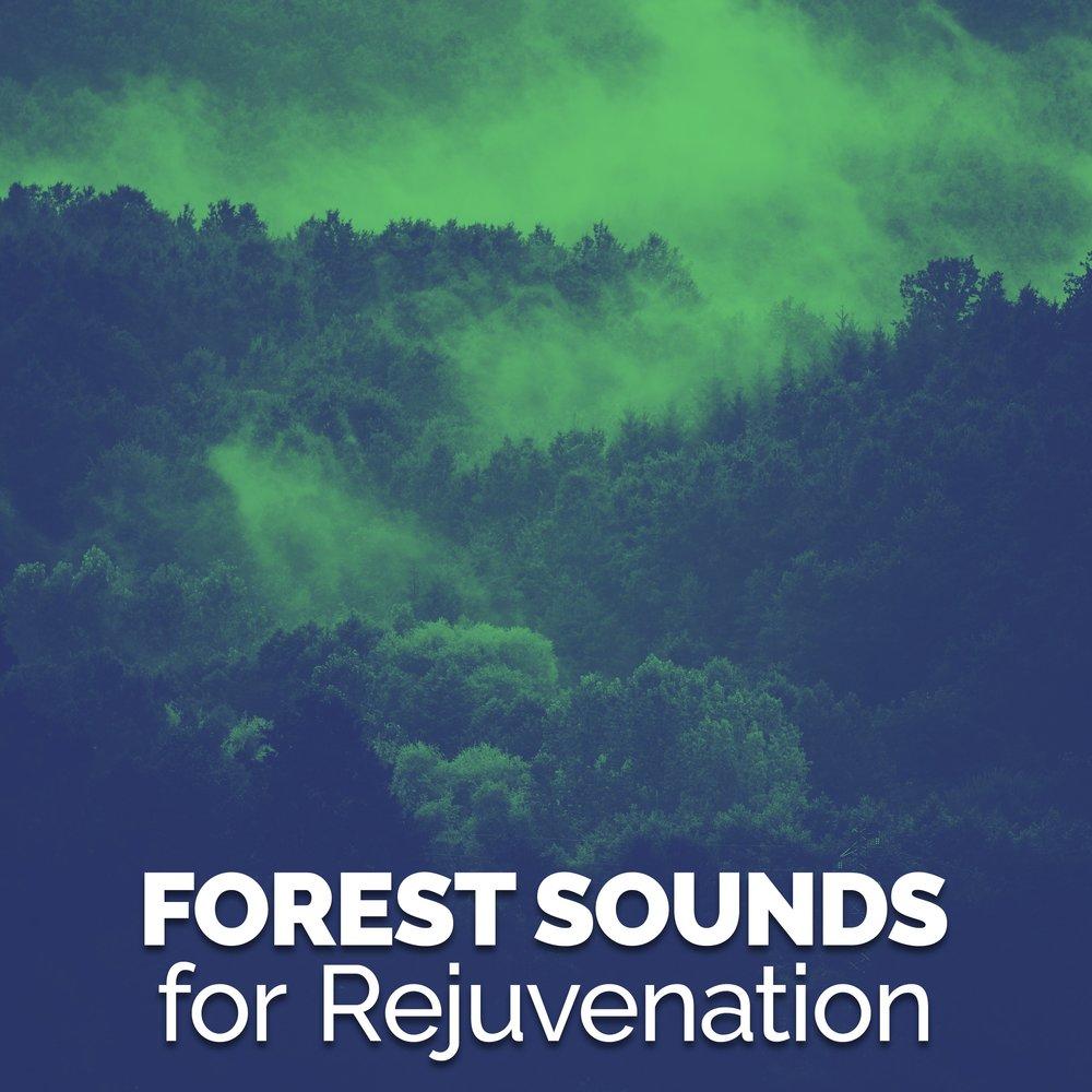 Forest Sounds for Rejuvenation — Natural Forest Sounds  Слушать