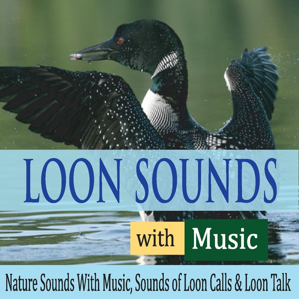 The Common Loon (With Soft Music)