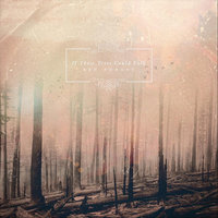 Red Forest — If These Trees Could Talk