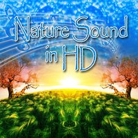 Nature Sound in HD — Nature Sounds in HD