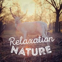 Relaxation Nature — Sounds of Nature Relaxation