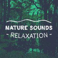 Nature Sounds: Relaxation — сборник