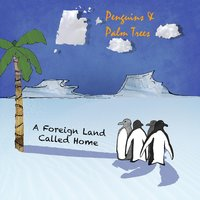 A Foreign Land Called Home — Penguins & Palm Trees