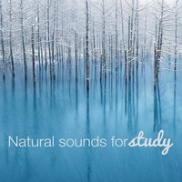Natural Sounds for Study — Nature Ambience