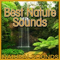 Best Nature Sounds (Nature Sound) — Natural Sounds