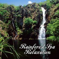Rainforest Spa Relaxation — The Rainforest Spa Players