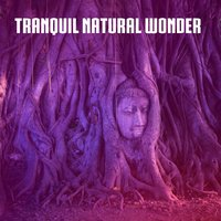 Tranquil Natural Wonder — Ambient Forest, Ambient Rain, Ambiente