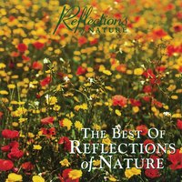 The Best of Reflections of Nature — Reflections of Nature