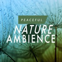Peaceful Nature Ambience — Nature Ambience