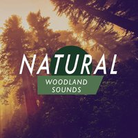 Natural Woodland Sounds — The Ultimate Sounds of Nature, Forest Sounds Relaxing Spa Music Singing Birds, The Healing Sounds of Nature, The Healing Sounds of Nature|Forest Sounds Relaxing Spa Music Singing Birds|The Ultimate Sounds of Nature