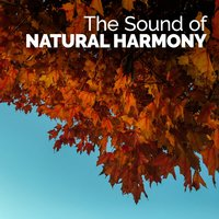 The Sound of Natural Harmony — Sounds of Nature for Deep Sleep and Relaxation
