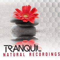 Tranquil Natural Recordings — Nature Sound Collection