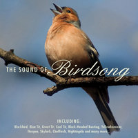 The Sound of Birdsong — сборник